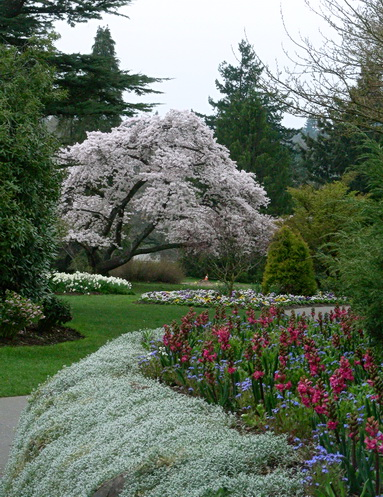 Queen Elizabeth Park. Vancouver BC 2012. Photo by J. Chong