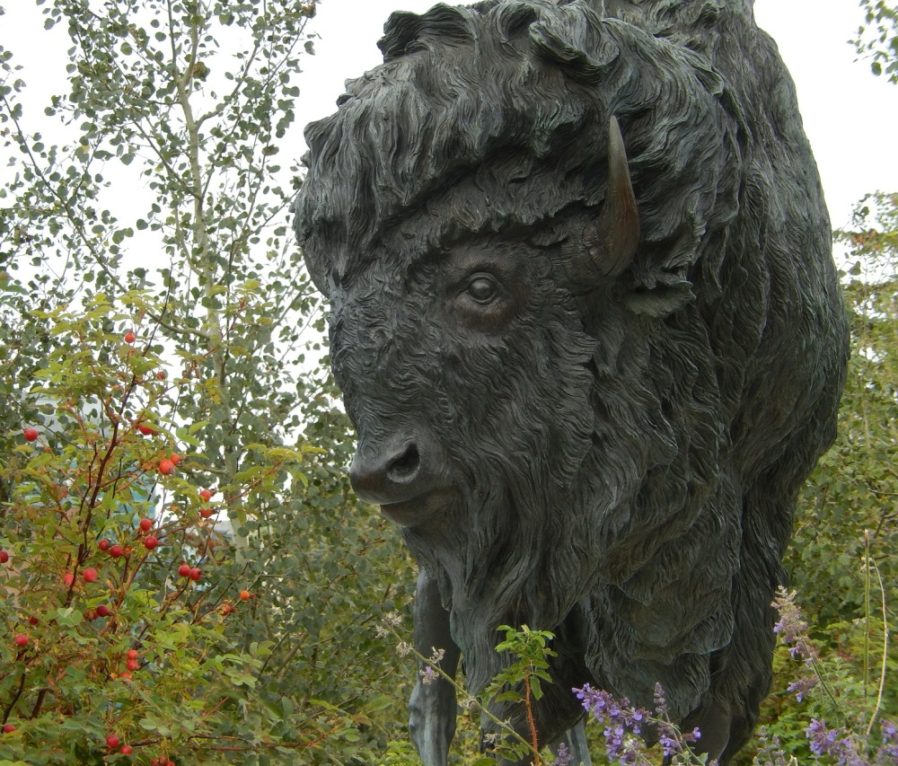 Buffy (as named by some locals), the bison statute by Fort Calgary 2015. Photo by J.Chong